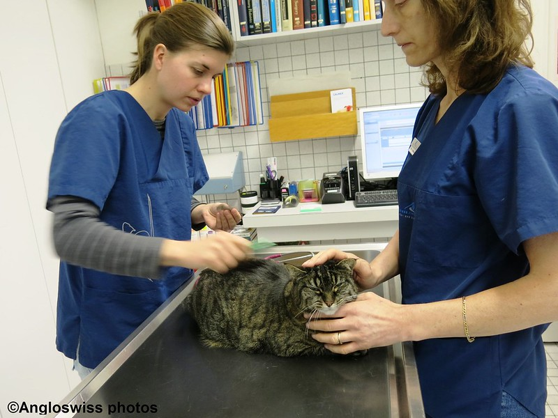 Tabby at the vets for jabs 2014