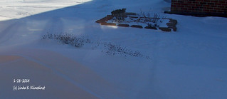 100_9077 - Winter 2014 - 1-28-2014