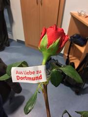 SPD Dortmund: Wahlkampfauftakt am Valentinstag mit Oberbürgermeister Ullrich Sierau, roten Rosen - und Emma vom BVB.