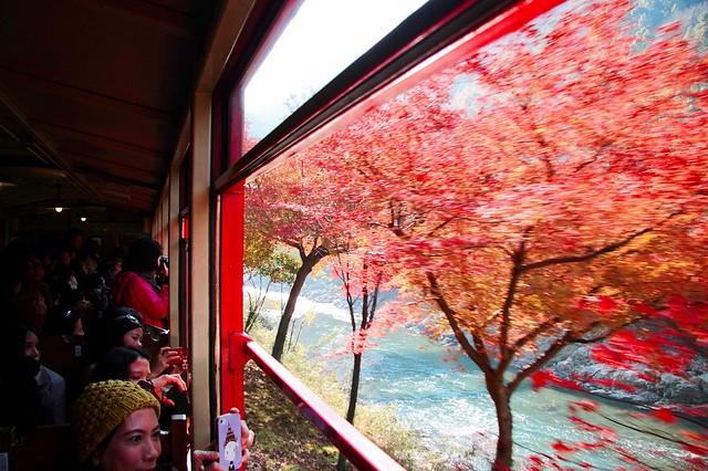 【旅遊】終於搶搭上秋末賞楓「嵯峨野トロッコ列車」之我要哭了我