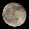 Full Worm Moon, 98% of the Moon is Illuminated P1030800 by Ted_Roger_Karson