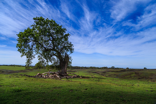 california landscape spring outdoor tablemountain oroville 2014