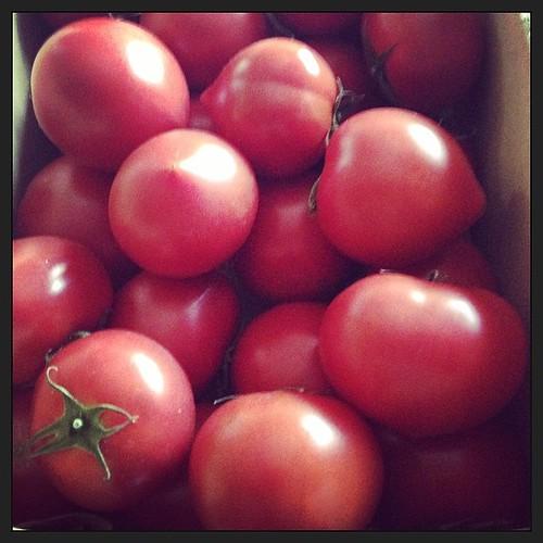 姉が芥屋の持田農園のトマトを持ってきた。