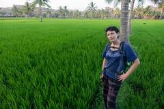 Pole ryżowe w Virupappur Gadi