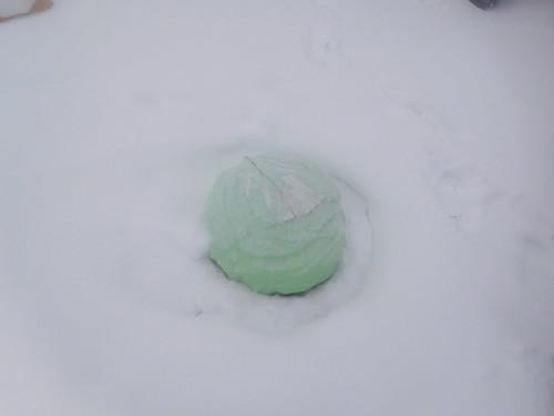 冷凍キャベツ