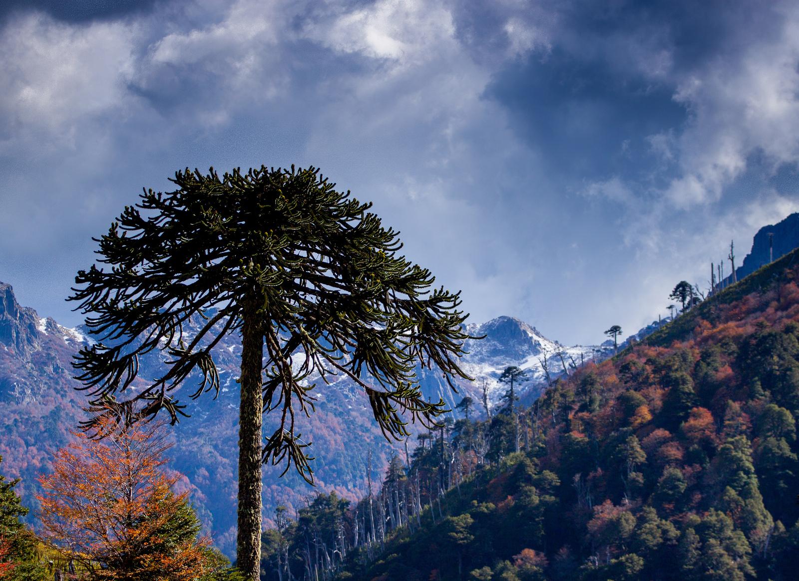 La Araucania, al sur de Chile. Autor, Flavio Camus