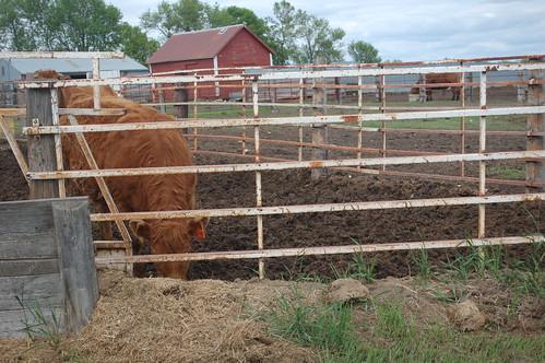 farm 077