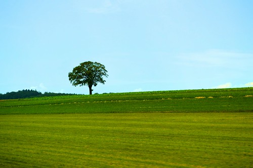 trees green landscape switzerland spring beirut minimalistic trainphotography