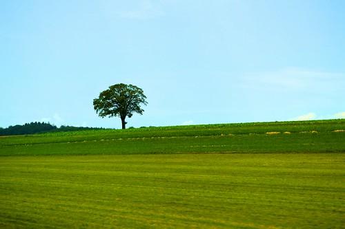 trees green landscape switzerland spring beirut minimalistic trainphotography