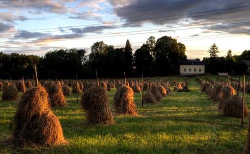summer finland landscape pentax farm pastoral k30 pentax1855mmf3556 pentaxk30