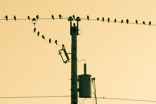 Birds, Silhouette, Wire, Power Line, Monochrome