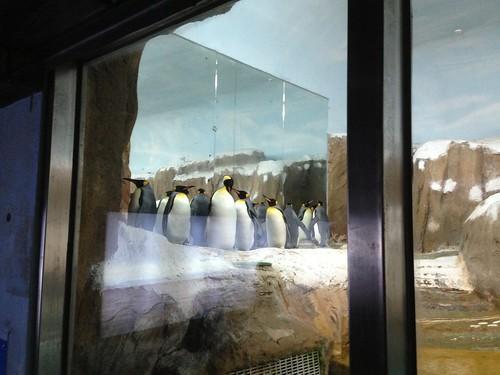 7企鵝館_國王企鵝