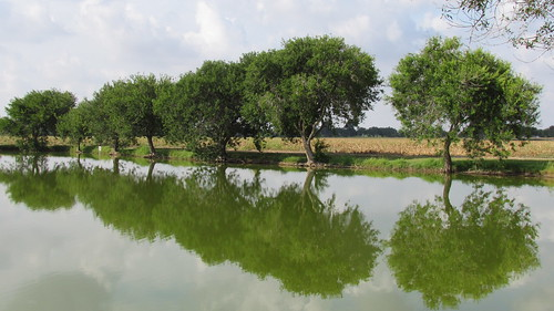 trees sky nature reflections outdoors pond day texas shadows naturalbeauty riverbend resaca