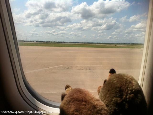 Hedgehogs On A Plane 1