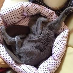 踊るように寝てる