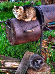 Cats On A Cold BBQ