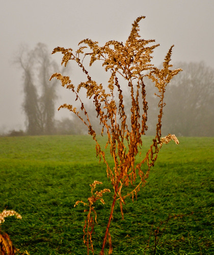 trees plant background foggy vine dried foreground