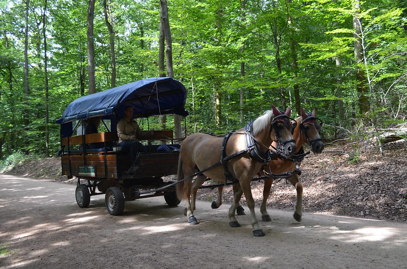 Rheingau Romantik Tour_horse-drawn carriage in the forest