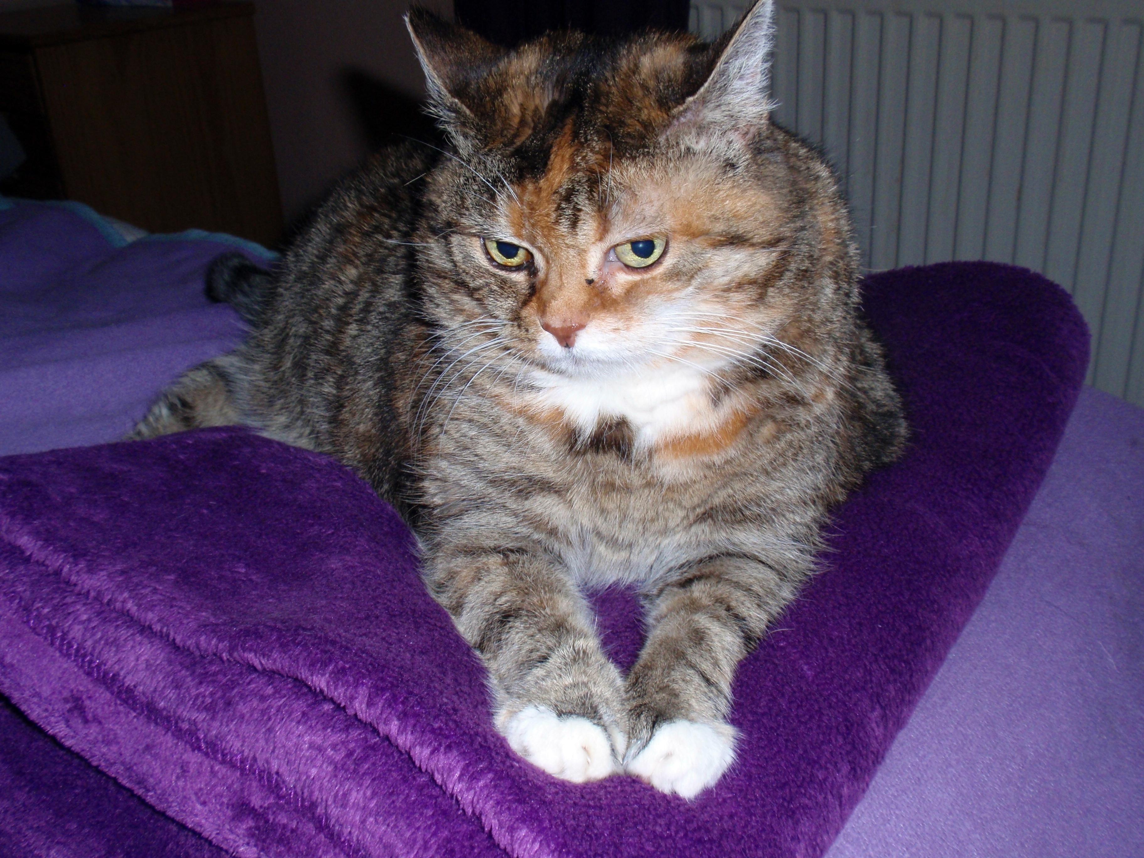 Katze Venus auf meiner neuen Kuscheldecke
