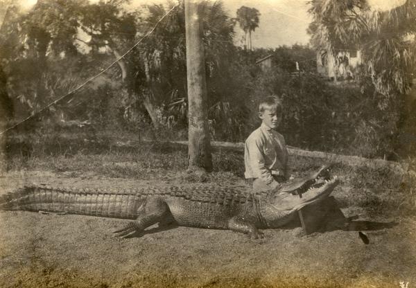 Koreshan Julius Koester and a slain alligator in Estero, Florida