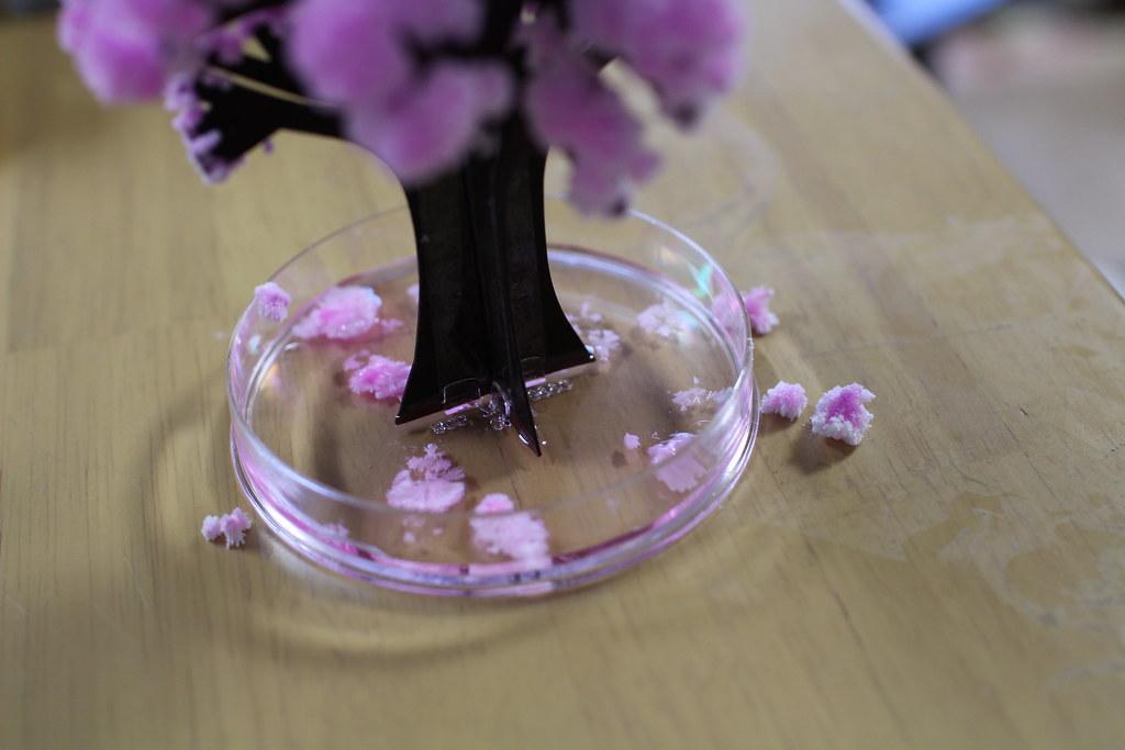 Magic桜(マジックさくら)8