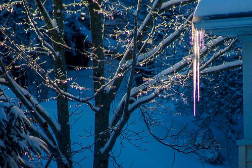 blue winter sunset snow tree ice bluehour