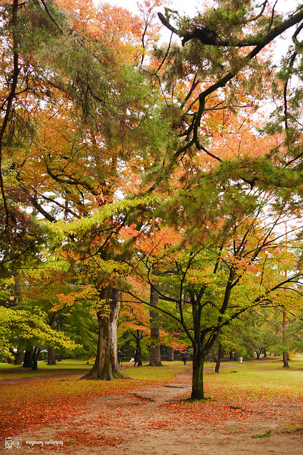 Panasonic_GX7_Kyoto_09
