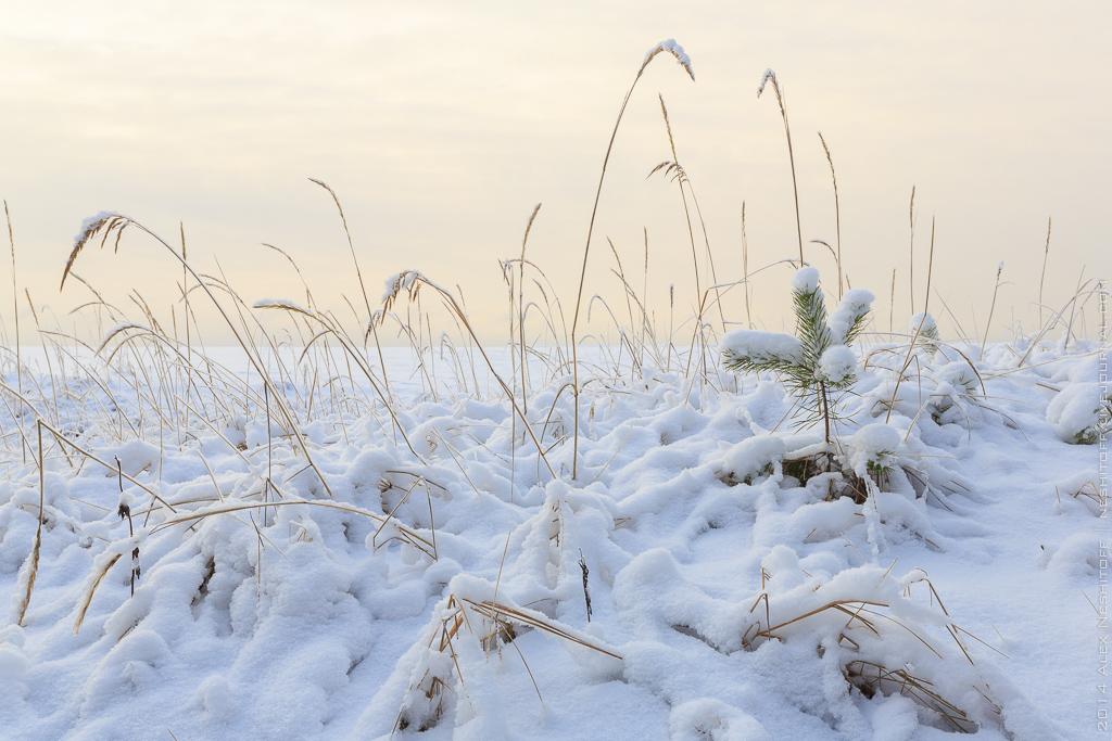 2014-Russia-Karelia-Onemyday2-006