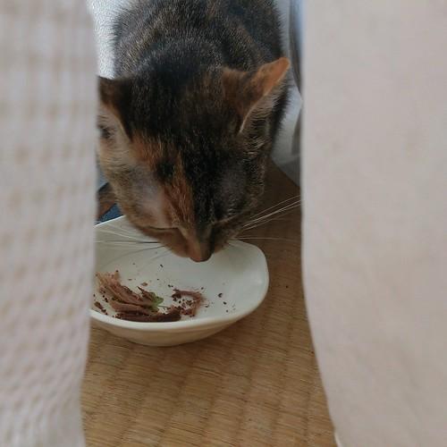 カーテンに隠れながらおやつを食べる by Chinobu