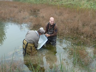 ODFW photo - Paul Scheerer and Brian Bangs introducing Oregon chub to a private pond in Benton County