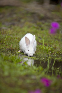 Bunny in Wonderland