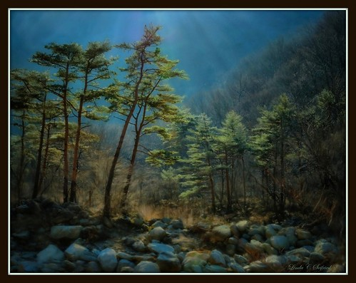 Mountain Pines, Korea