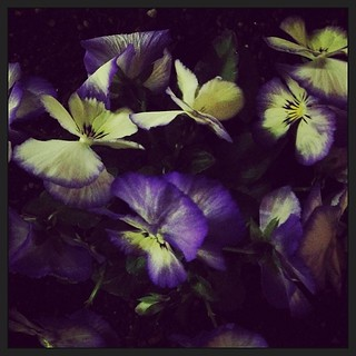 #flowers at night