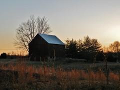 Calvert Historical Barns with highlights of prairie grass and sun glow