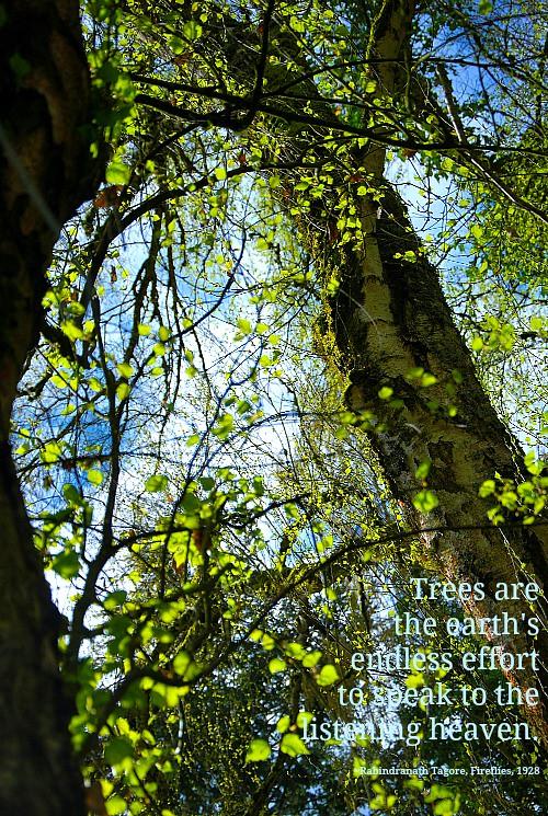 DSC_0009-trees
