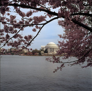 Cherry Blossom Festival - Jefferson Memorial - Washington, D.C.