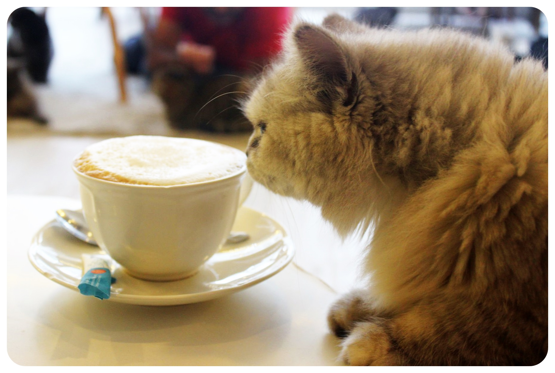 bangkok cat cafe