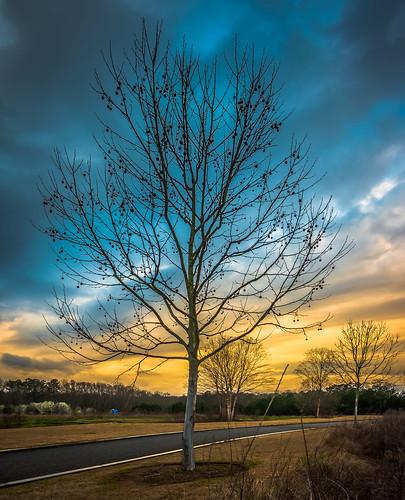 nx500 samsungnx500 rokinon12mmf2 sunrise sunset tree apsthemeexhibition2017