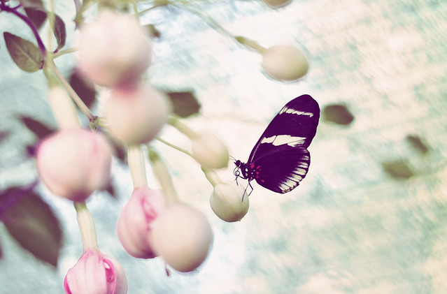 Butterfly_greenhouse
