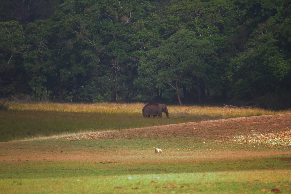29_04_20123988018737_Elephant_at_Periyar