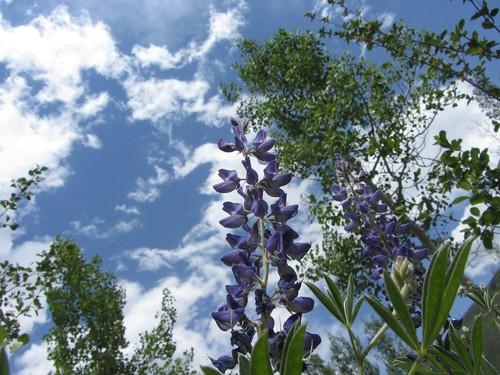 ute-cem-flowers 2