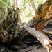 Biiig Tree!!! by lisawiz