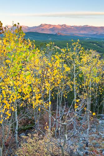 morning autumn trees foothills mountains forest sunrise flora colorado unitedstates aspens blackhawk continentaldivide goldengatecanyonstatepark