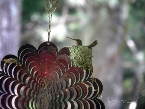 Photo of the Day #POTD June 16, 2013 Nest by its me _T via I {heart} Rhody