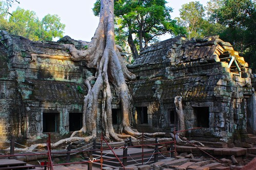 these trees are just really amazing at Ta Prohm… really have a mind of their own