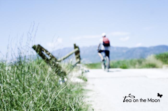 Inspira Alvaro Sanz 2013-bicicletas 0