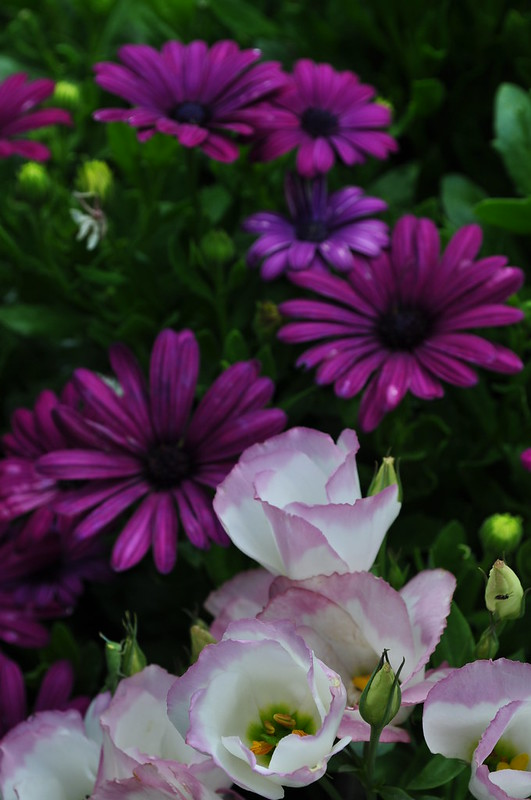 MacKinlay Garden (16)