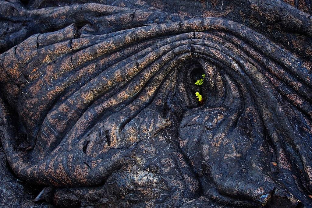 Lava life