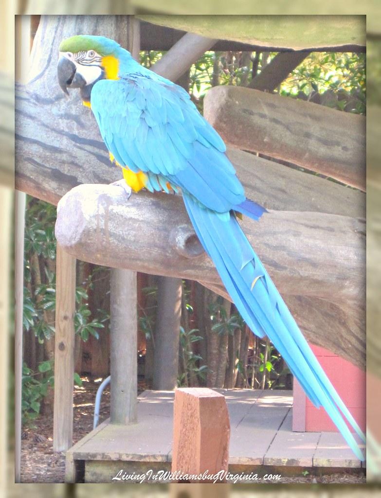 BG Parrot