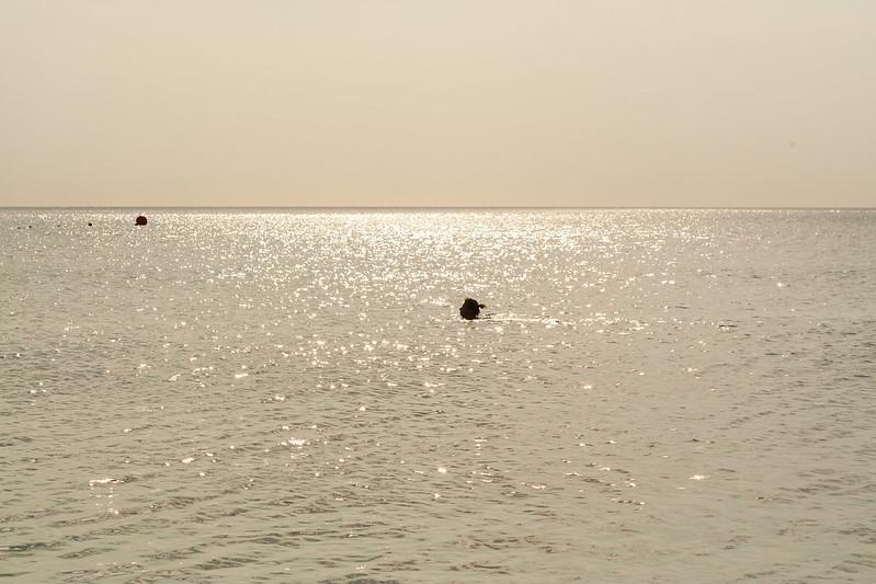 Море здесь просто великолепное!
